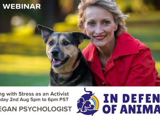 Tools to Manage Stress as an Animal Activist